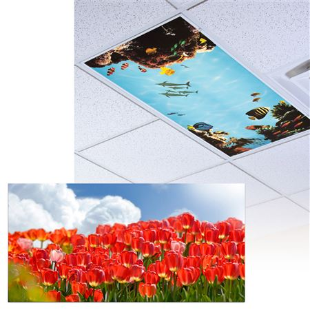 Red Tulips Light Panel