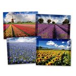 Flower Fields Practicare Postcard