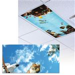 Pets Light Panel 1/Each